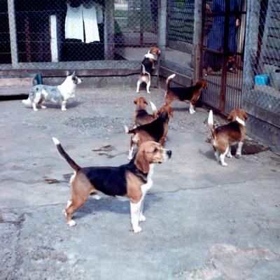 Group of Rozavel dogs.jpg