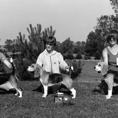 Very Special Show about 1984. Winners of Very Special Class (same litter). Daisy Hills Kyske Karoline (left), Daisy Hills Kærlige Katinka (middle) and Daisy Hills Kløgtige Karpov (right).jpg